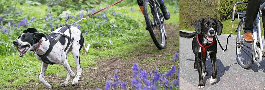 exemples de longe à chien pour vélo
