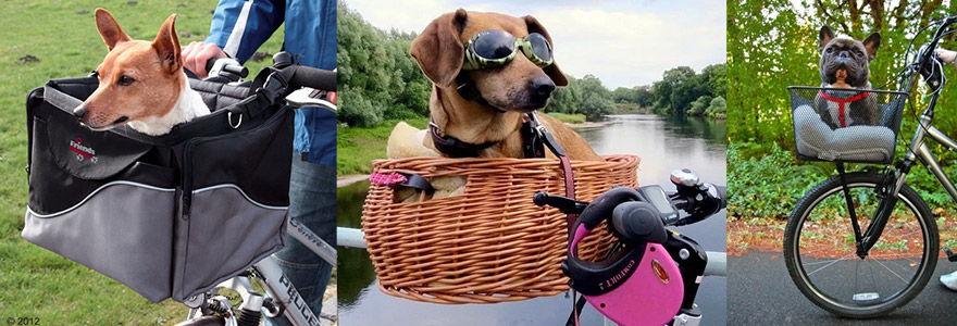 exemples de paniers pour chiens sur guidon
