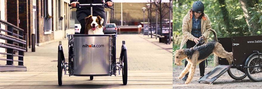 exemples de vélos cargos pour chiens